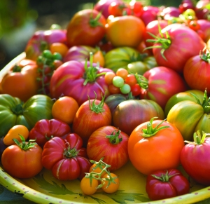 heirloom-tomatoes-istoc39e1