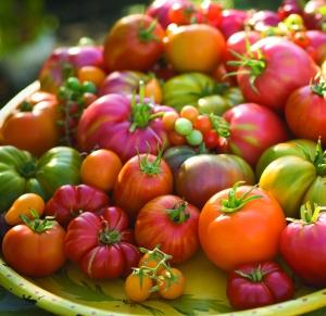 heirloom-tomatoes-istoc39e1