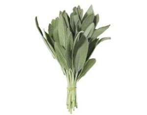 sage(herb)